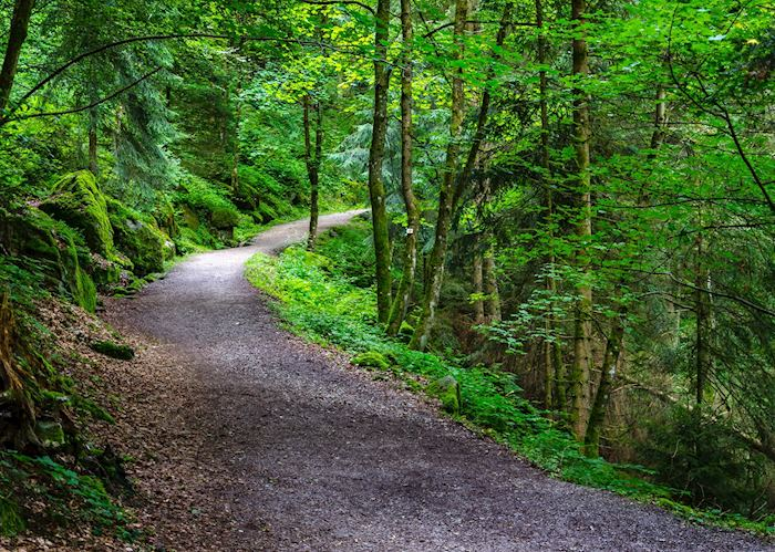 Tree lined path of Triberg