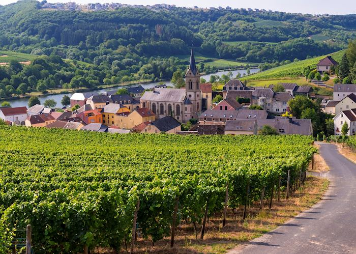Vineyards of Moselle Valley outside Ahn, Luxembourg