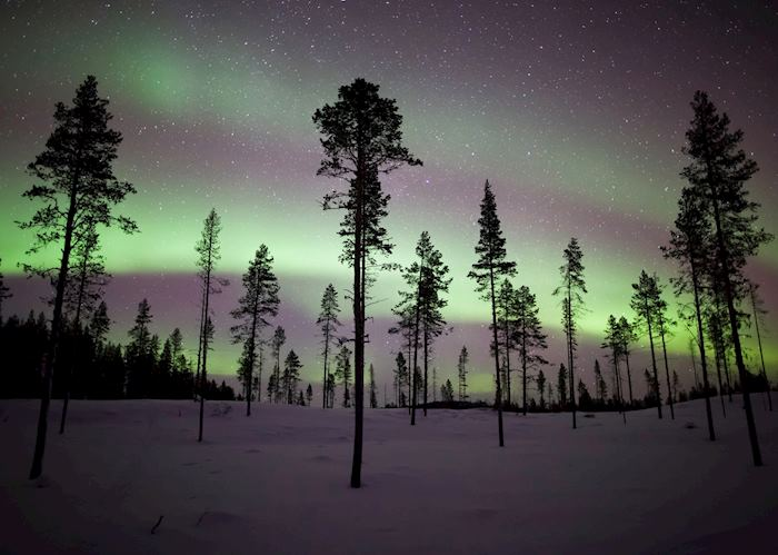 Northern lights over the forest, Kiruna