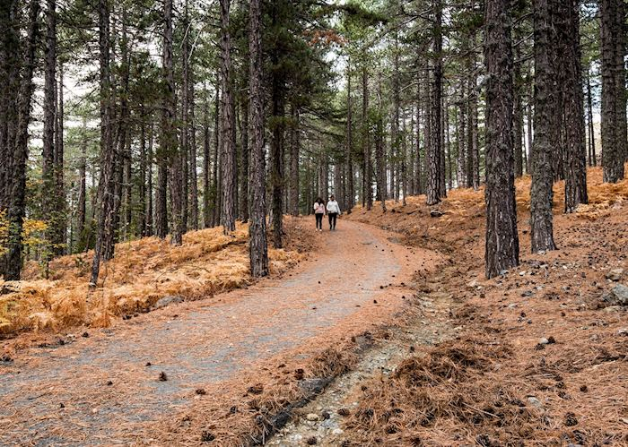 Hiking paths, Troodos Mountains