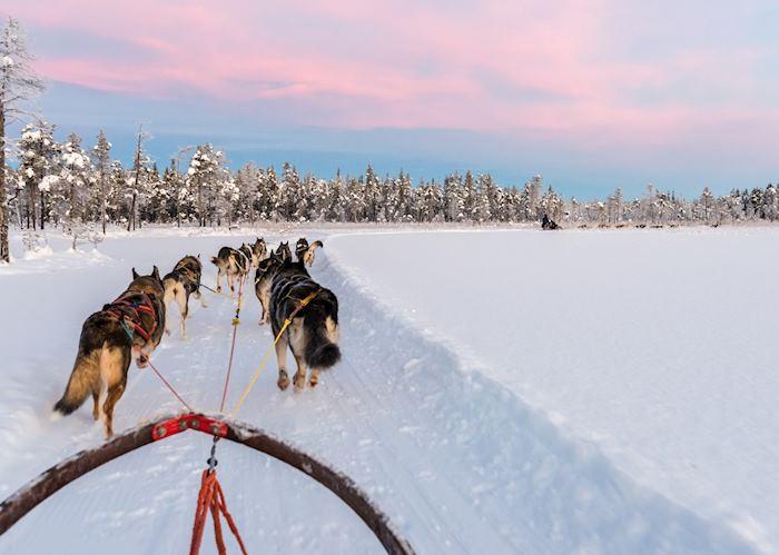 Dog sledding at sunrise
