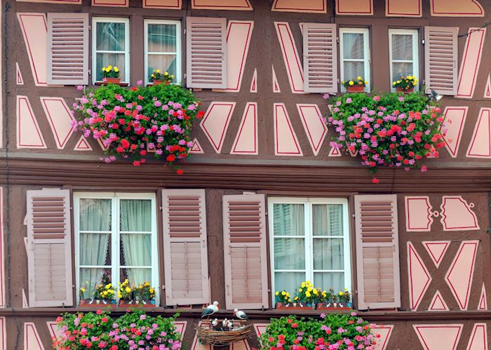Floral windows of Alsace