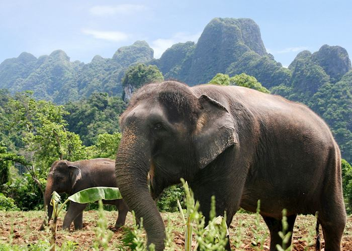 Elephant Experience at Khao Sok National Park