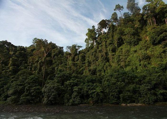 Bukit Lawang National Park, Indonesia