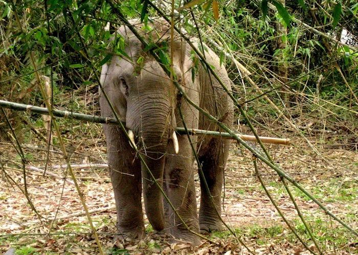 Elephant in Khao Yai National Park, Thailand