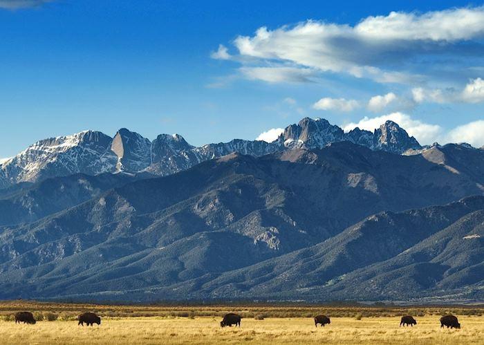 Buffalo at Zapata Ranch