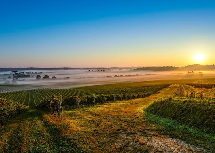 Médoc wine region, France