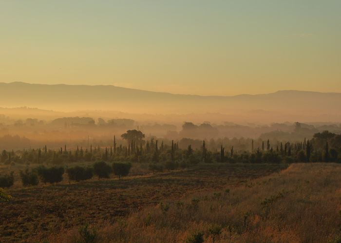 Misty morning, Tuscany