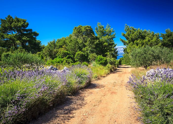 Trails of lavender, Hvar