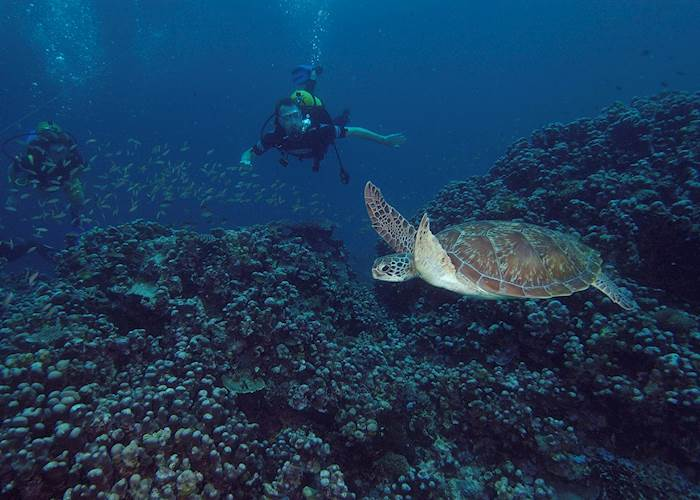 Diving around Pemba