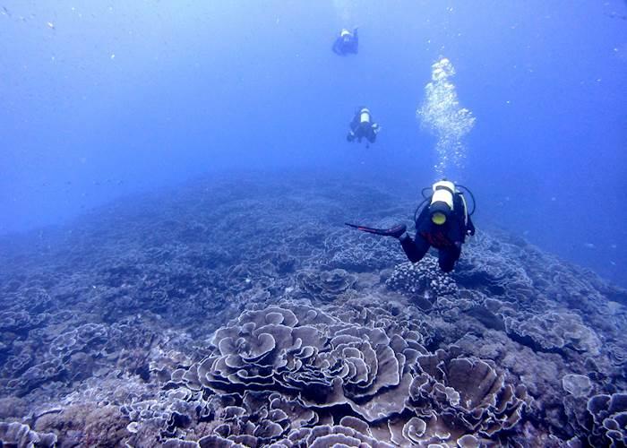 Diving over cabbag corals, Pemba Island
