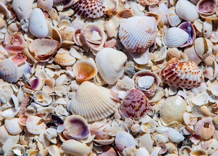 Seashells on Captiva Island, Florida