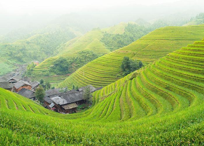 Rice paddies, Northern Luzon