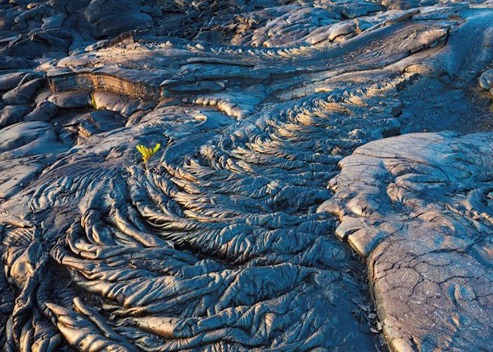 Solidified lava bed, Hawaii (Big Island)
