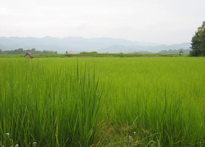 Paddy field, Luangnam Tha, Laos