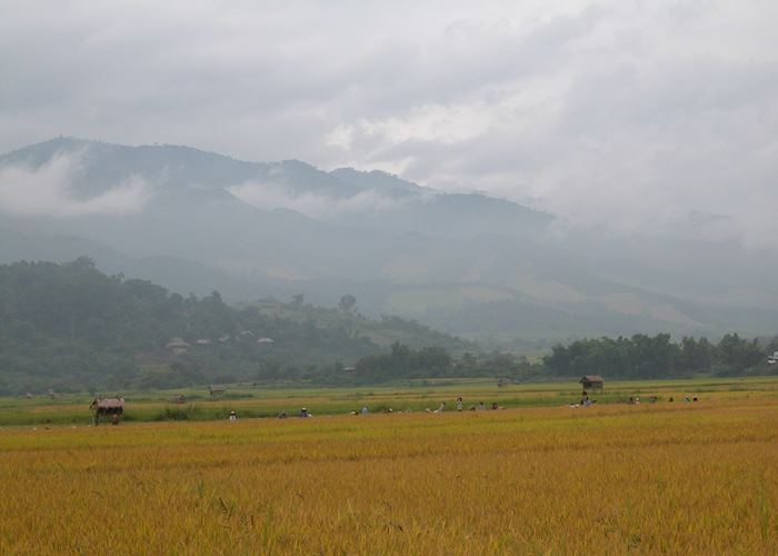 Paddy fields near Luangnam Tha, Laos