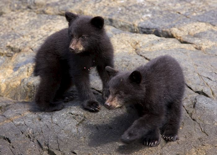 Bear cubs by Matt Maran