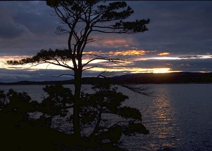 Silhouette of a tree in Killarney