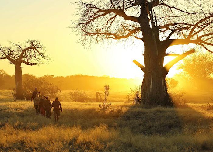 Walking safari, Kichaka