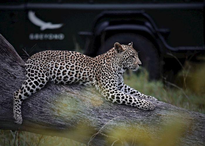 Kirkman's Kamp, leopard