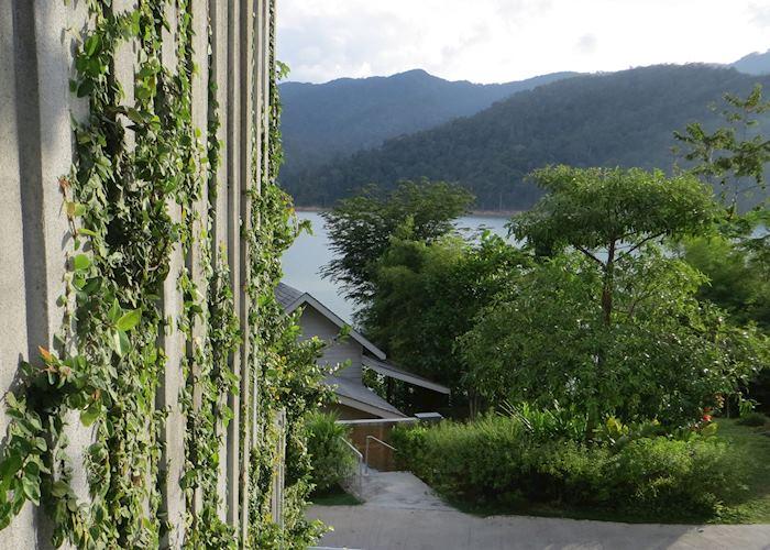Eco friendly wallpaper at Belum Rainforest Resort