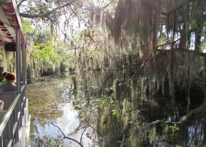 Cajun Pride Swamp tour