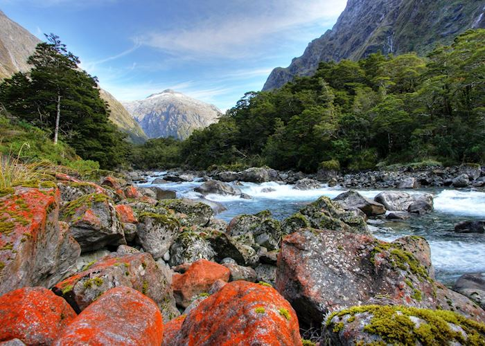 River on the Hollyford Track, New Zealand