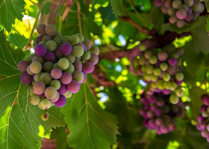 Grapes, Loire Valley