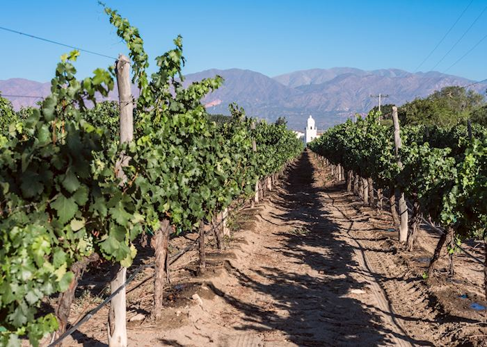 The vines at Patios de Cafayate