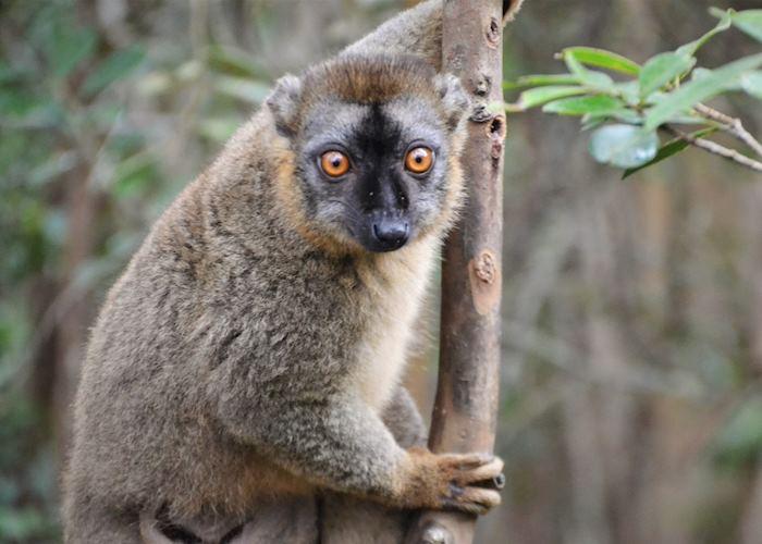 Lemur Island, Andasibe
