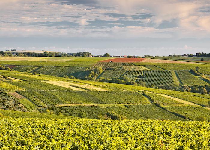 Lush landscape, Loire Valley