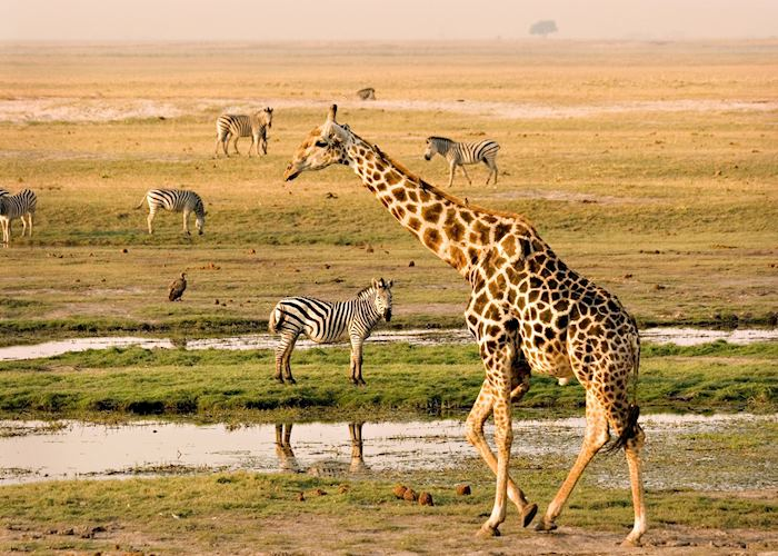 The Chobe River attracts a variety of game