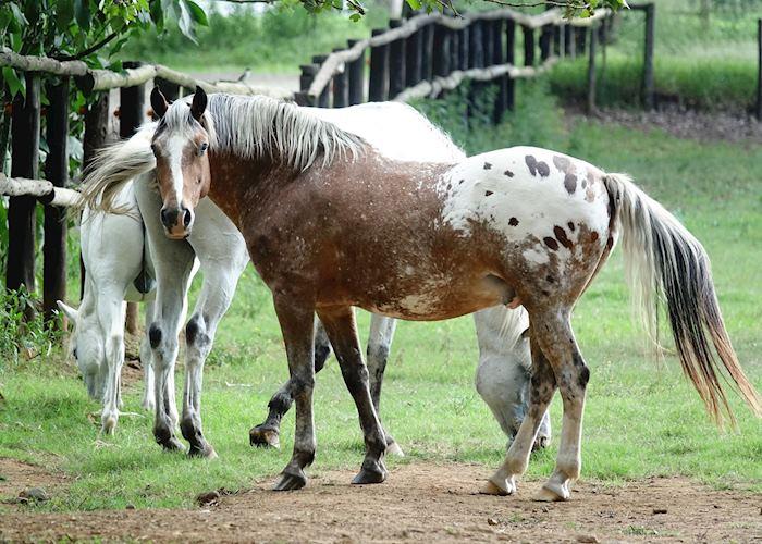 Horse on Stud Farm - The Midlands