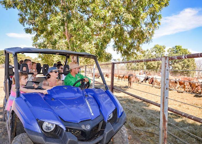Bullo River Cattle