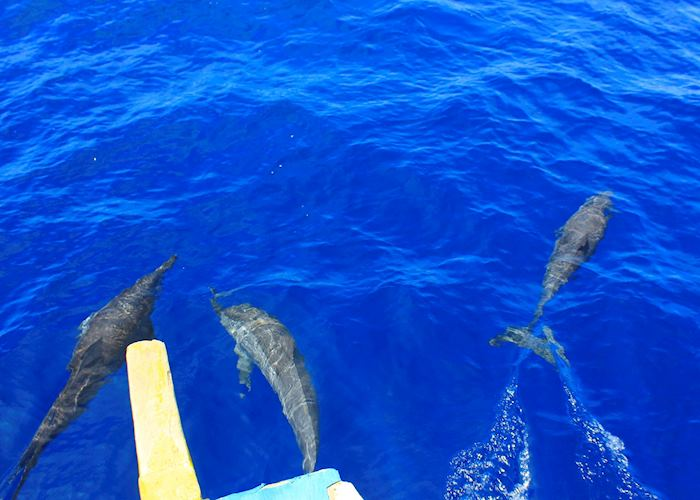 Dolphins of the coast of Bais