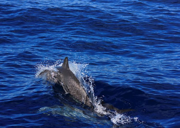 Dolphin watching of the coast of Bais