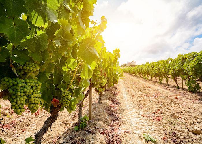 Vineyards, Évora