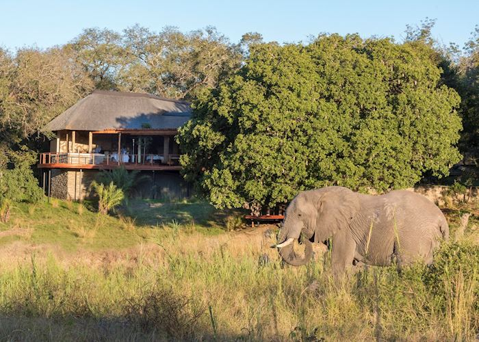 Elephant at Dulini River Lodge