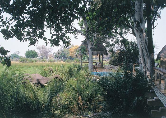 Little Mombo, Chiefs Island