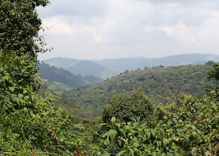 Bwindi Impenetrable Forest National Park