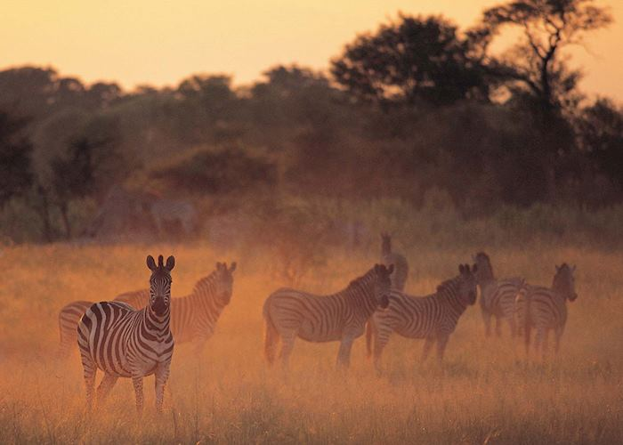 Dawn in the Nxabega Concession