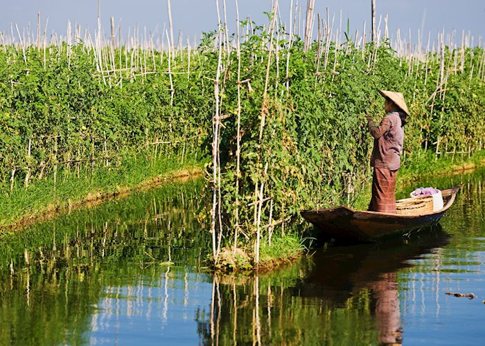 Floating vegetable gardens, Inle Lake