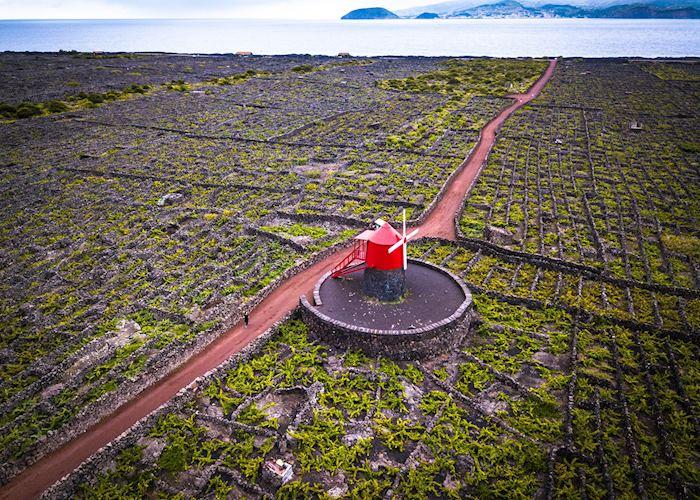 Windmill, Criação Velha, Pico