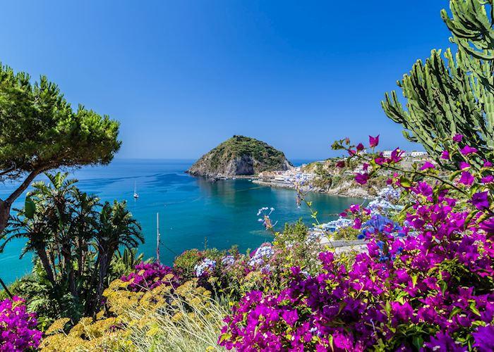 Bougainvillea in Ischia, Italy