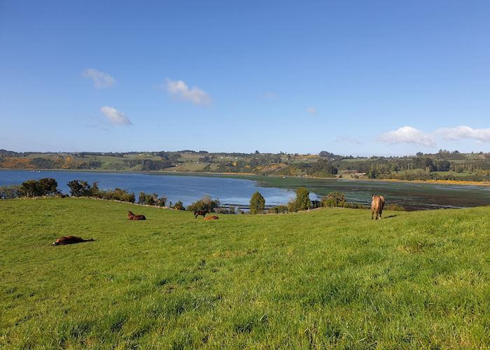 View of the wetlands and inland sea from Tierra Chiloé