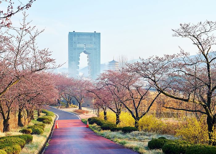 Gyeongju in the cherry blossom