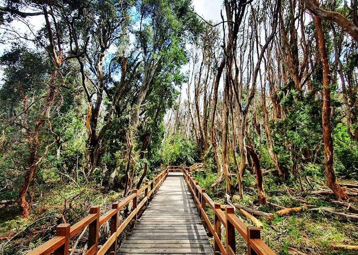 Walking trails in Villa La Angostura