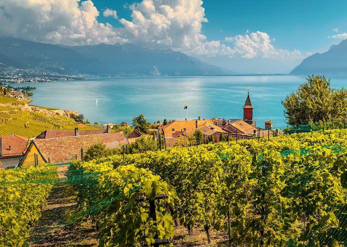 Vineyards above Montreux