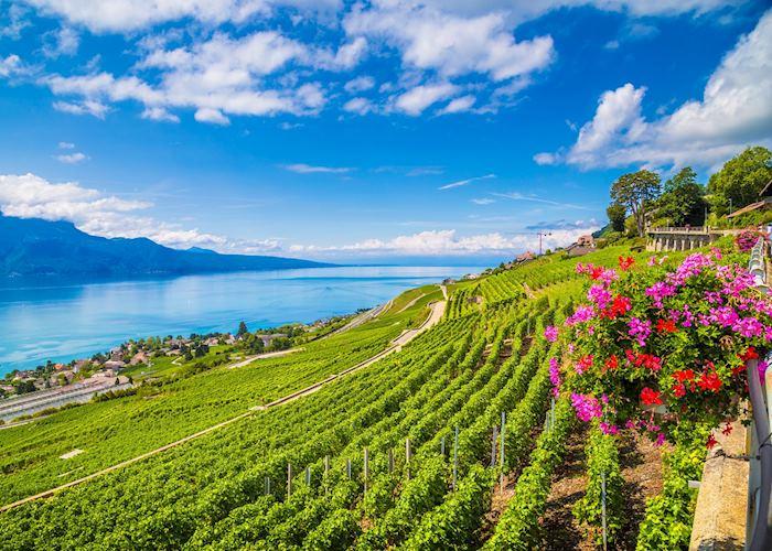 Lavaux wine tour , Montreux