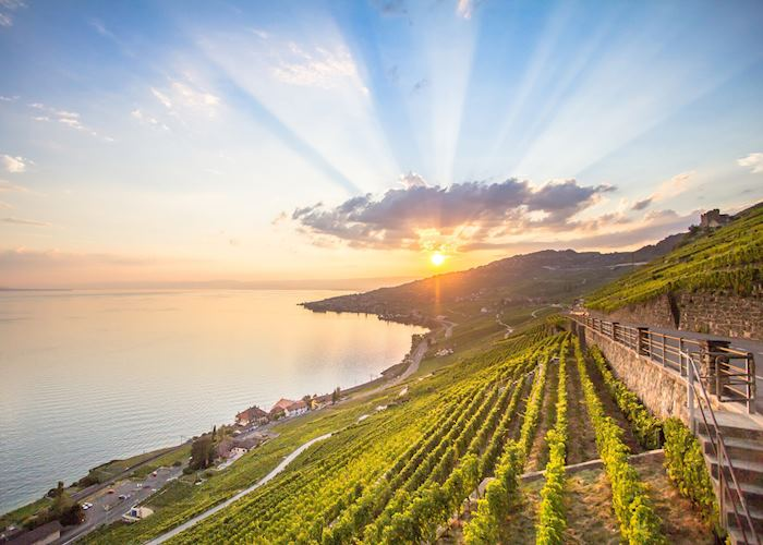 Vineyards of Lavaux on Lake Geneva